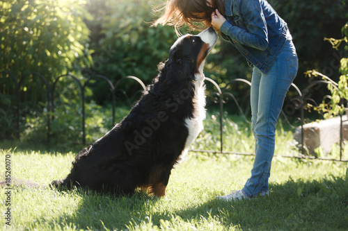 The girl with the pet. Bernese mountain dog in nature Poster