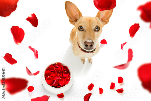 Foto op Plexiglas Crazy dog happy valentines dog