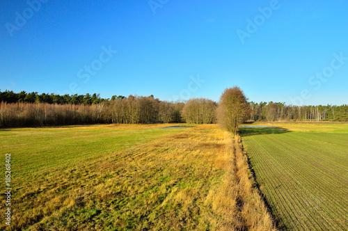 Papiers peints Miel Pole i las oświetlone w dzień jesiennym słońcem.