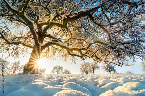 Leinwanddruck Bild Winter Landschaft mit der Sonne hinter einem schönem Baum