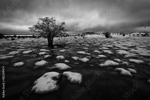 Snowed field in a cloudy winter day