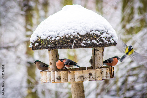 Leinwanddruck Bild Vögel am Vogelhaus