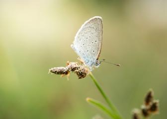 beautiful white butterfly