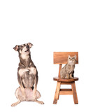 The cat and the dog are astonished together - 185340847