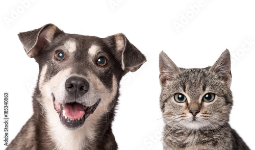 Cat and dog together isolated on white