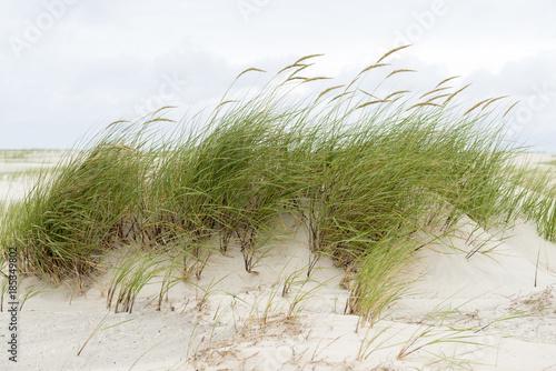 Foto op Canvas Noordzee Strandhafer im Wind.