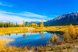 Yellow and orange colors of autumn - 185356254