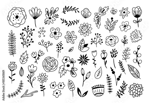 Floral graphic elements big vector set. Flowers and plants hand drawn illustrations