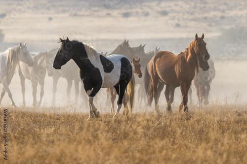 Foto Murales Herd of Wild Horses in the Desert