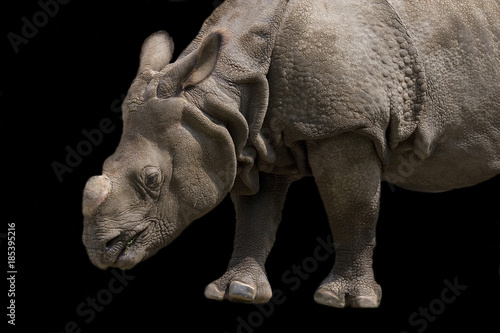 Obraz Fotograficzny Rhino on a black background