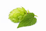 Fresh branch of hops isolated. - 185414603