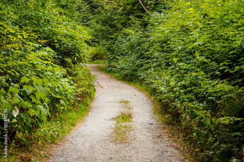Papiers peints Route dans la forêt y shaped path lead into the deep of the forest