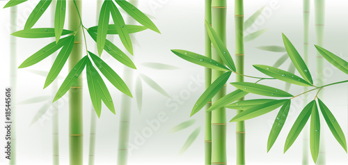Green bamboo horizontal background with stems and leaves on white