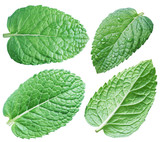 Four spearmint leaves or mint leaves. Collection. Clipping path. - 185454030