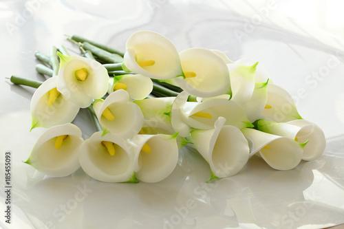 arum lily na białym
