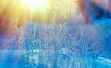 Winter scene - 185466242