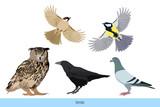 Vögel in Deutschland SET 01
