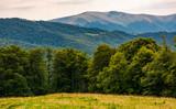 grassy meadow on forested hillside of Carpathians. lovely summer landscape in mountains. location near Svydovets mountain ridge, Ukraine