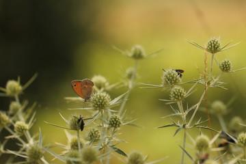 Farfalla su un fiore in estate.
