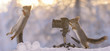 squirrels with snowball and camera