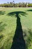 Shadow of a Hawaiian palm tree cast across a lawn - 185510819