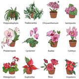 Set of different tipical indoor plants. Icons with  blooming flowers used for home and garden decoration