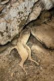 mummified cats