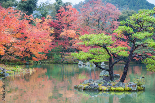 Papiers peints Kyoto Colorful autumn leaves at japanese garden in Kyoto, Japan.