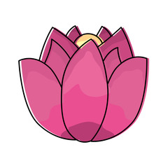 lotus flower wild botanical natural vector illustration