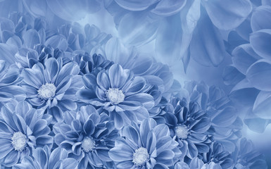 Floral white-blue beautiful background of dahlias.  Flower composition. Nature.
