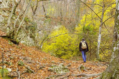 Foto op Canvas Natuur Autumn nature landscape trees in a forest