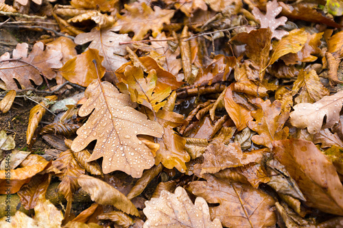 Yellow autumn leaves on ground