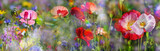 summer meadow with red poppies - 185571634