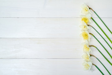 Border of daffodil flowers on white wooden background, copy space. Top view, flat lay. White narcissus. Spring flowers. Greeting card for March 8 (Women's Day), Mother's day. Spring easter background