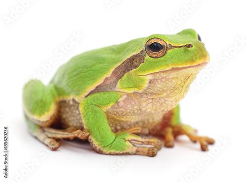 Aluminium Kikker Small tree frog.