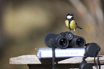 Tit bird with binoculars and ornithology bird field guide book