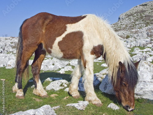 Pony im Karstgebiet