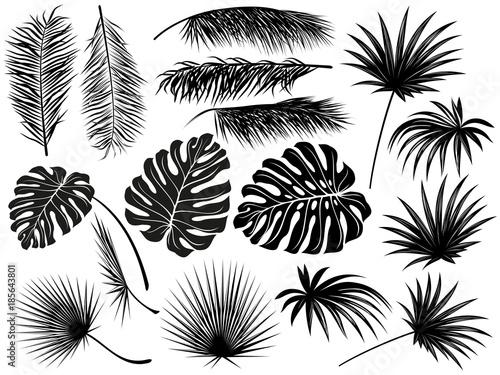 Sylwetki tropikalnych liści (palma kokosowa, monstera, dłoń wentylatora, rhapis). Set ręki rysować wektorowe ilustracje na białym tle.