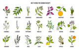 Fototapety Best herbs for aromatherapy
