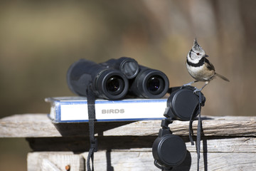 Tit bird with binoculars and ornithology field guide