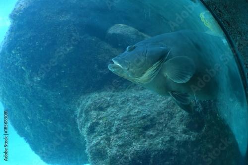 Fotobehang Dolfijn Marine Life