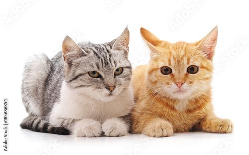 Two beautiful cats. - 185686854