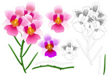 Vanda Miss Joaquim Orchid Outline