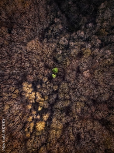 Foto op Canvas Natuur Trees and pine