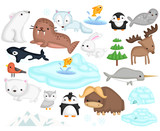 Arctic animal vector set - 185736085