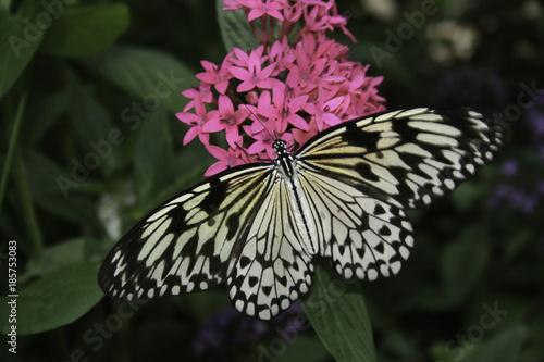 Florida Butterflies - 185753083