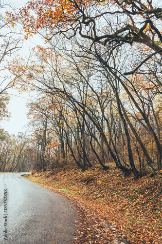 Foto op Canvas Herfst View of road in beautiful autumn forest