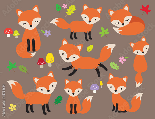 Fototapeta Cute fox vector illustration in various poses with leaves and flower elements.