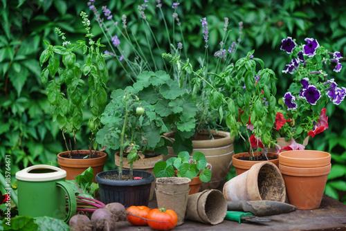 Foto Murales summer garden with vegetables