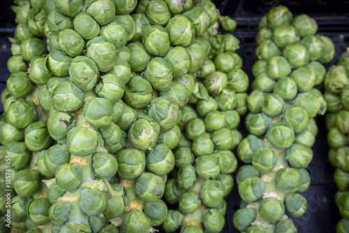 Papiers peints Bruxelles Fresh Organic Brussel Sprouts at a Local Farmer's Market